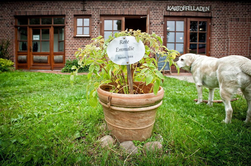 SMN-20120702-hofladen-12-von-15.jpg